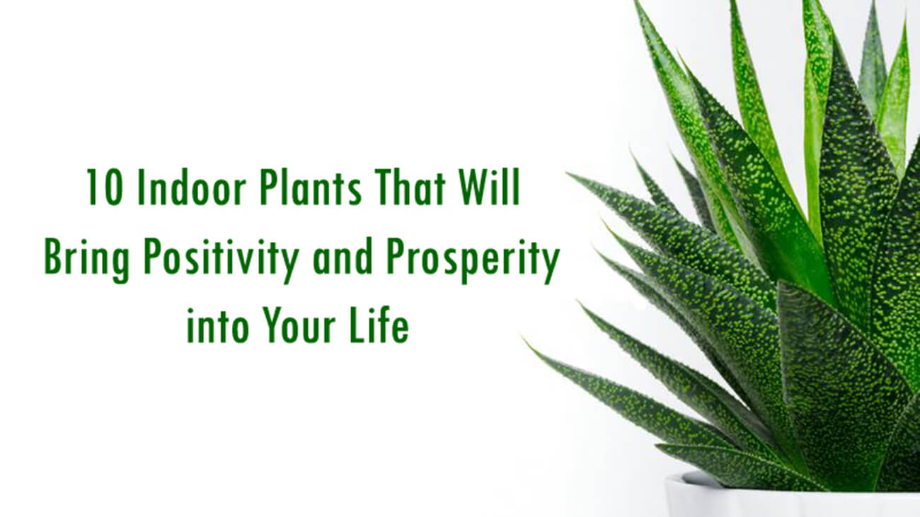 10 Indoor Plants That Will Bring Positivity and Prosperity into Your Life